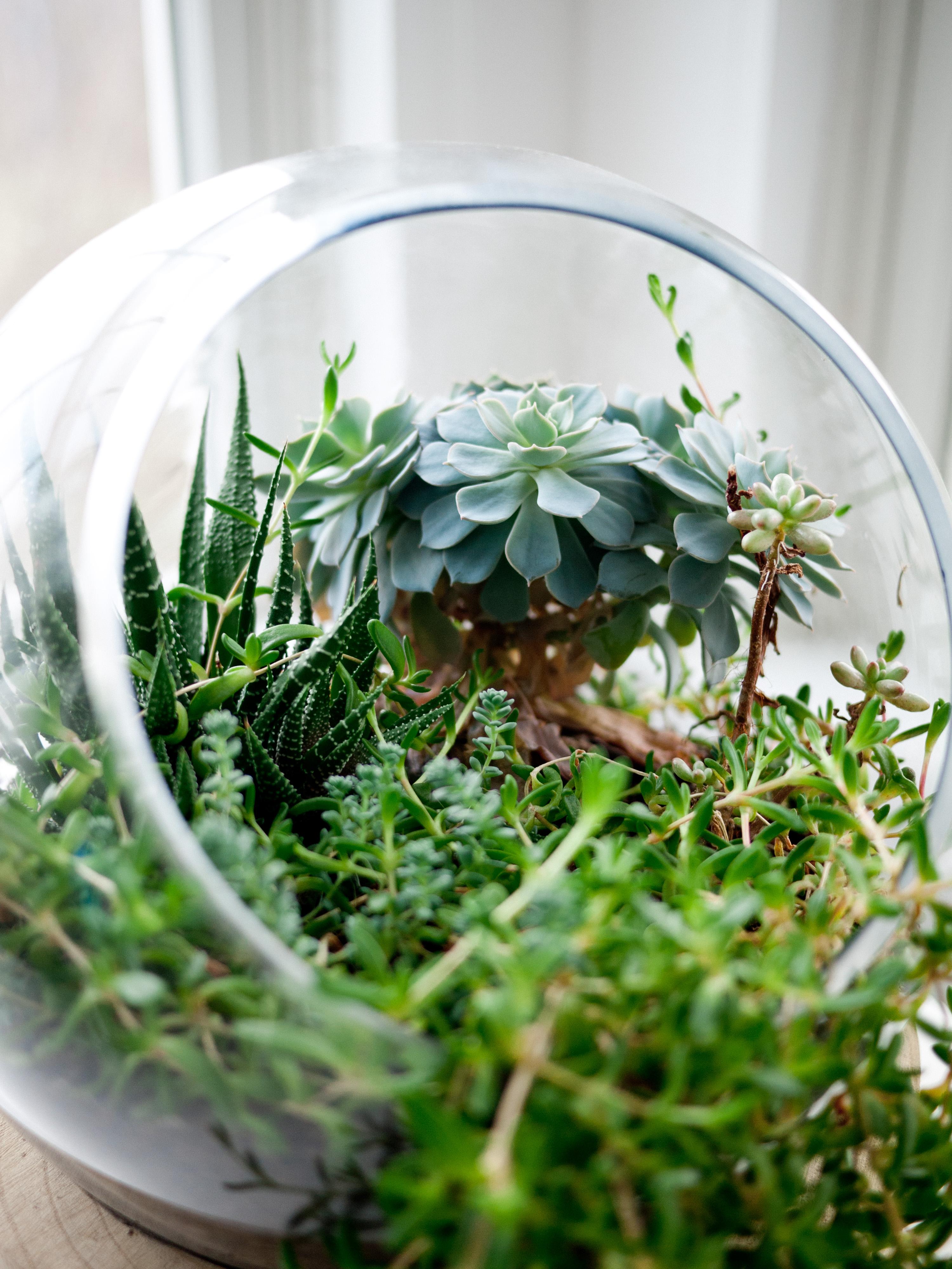idée de déco succulents